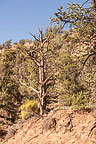 Along Mule Canyon Trail