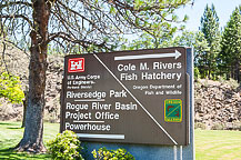 Fish Hatchery