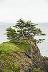 Trees Near Yaquina Lighthouse