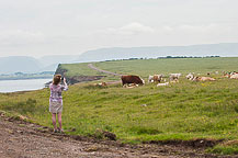 Anne Photographing Cows