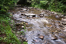 Campground Stream